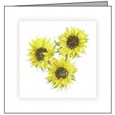 GEN03 Sunflowers
